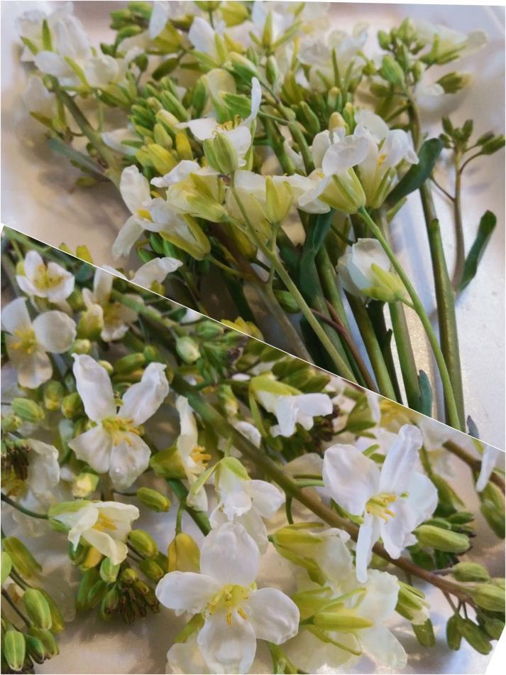 カイラン花